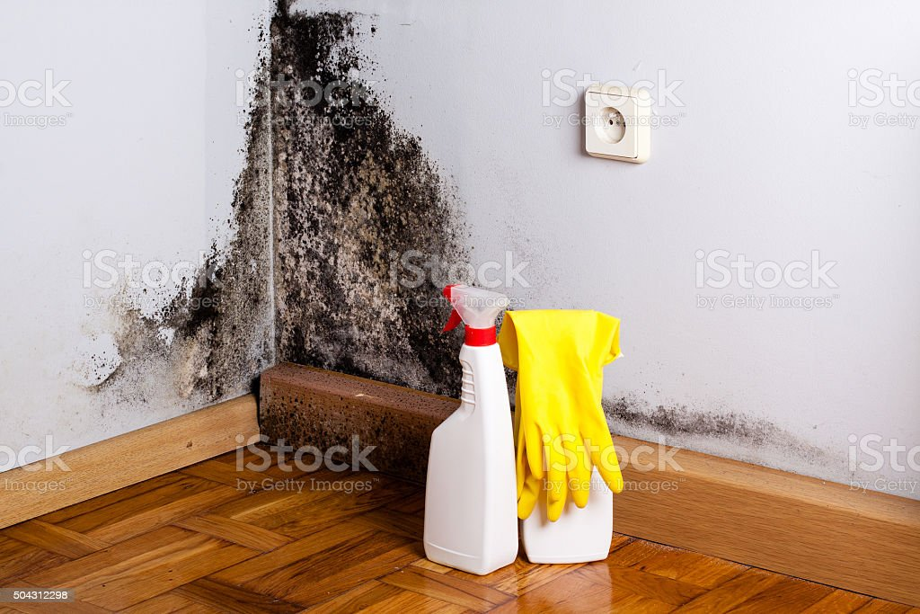 Black mold in the corner of room wall stock photo