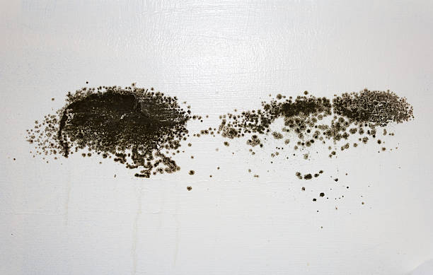 Black Mold on a wall stock photo