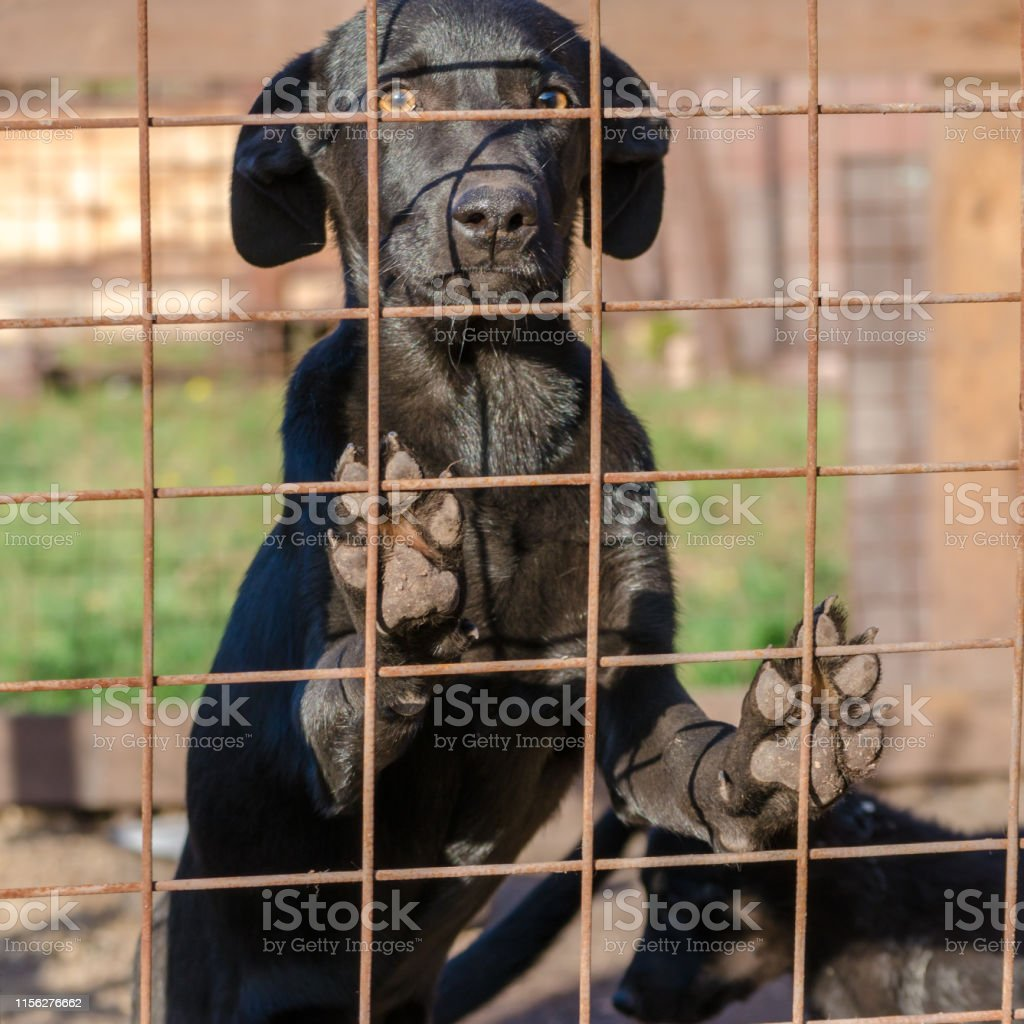 black mongrel puppy came paws on the lattice of his cage