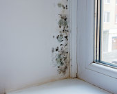 Black mould and fungus on wall near window. The problem of ventilation, dampness, cold in the apartment.