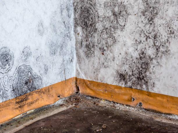 Schwarzer Schimmel an der Wand der Wohnung – Foto