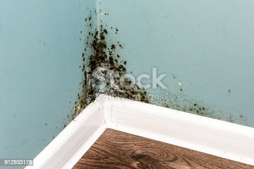 Black mould on wall closeup. House cleaning concept