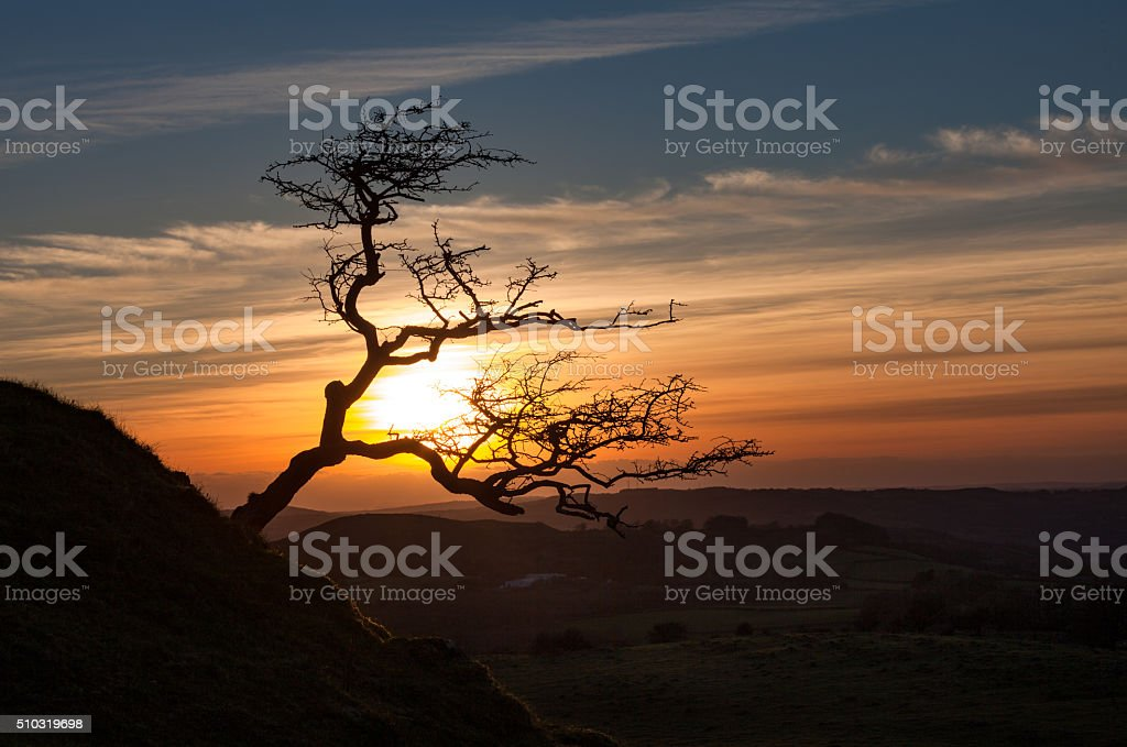 Black Mountain tree stock photo