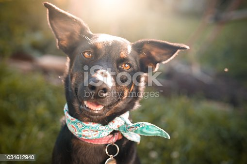 Cute black mutt dog outdoor portrait