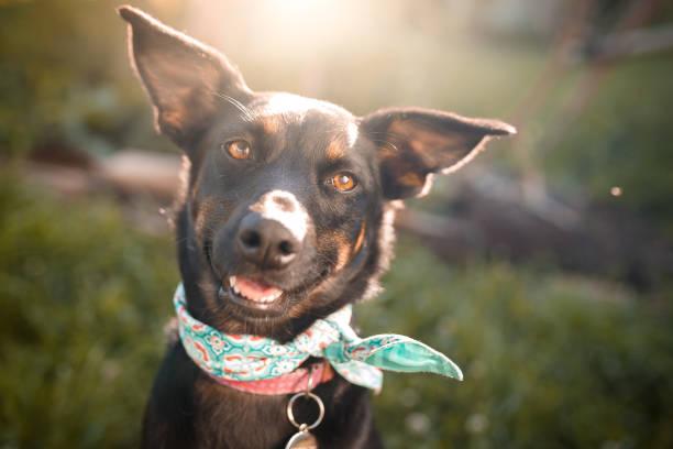 Black mutt dog outdoor portrait picture id1034612940?b=1&k=6&m=1034612940&s=612x612&w=0&h=2un0kugqjb69lqrsuvcfwhnlbhi6osqktiikfipkivc=