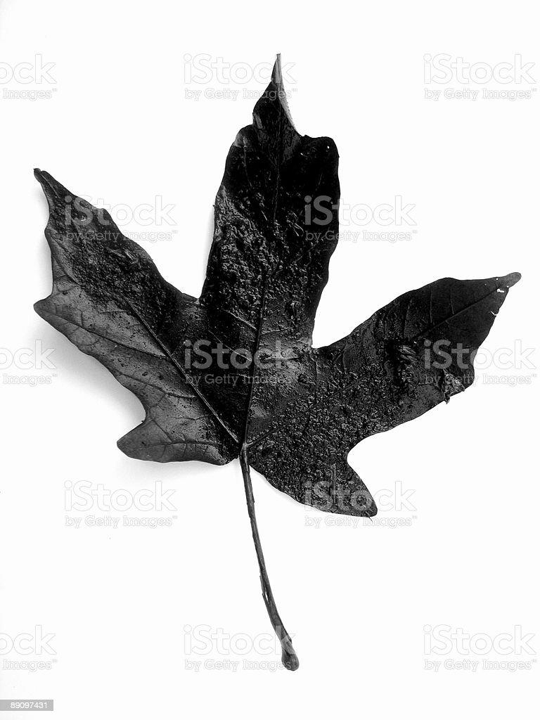 Black Nature royalty-free stock photo