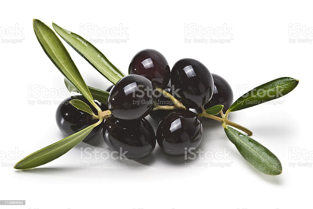 Black olives on the branch. stock photo