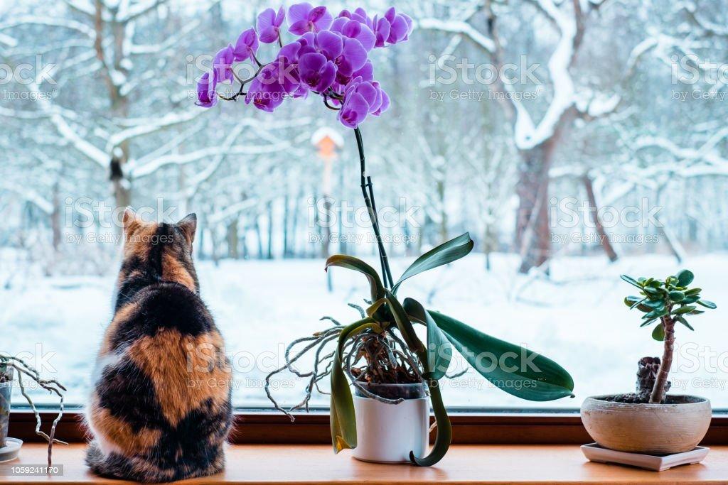 Preto, laranja e branco feminino gato sentado dentro bulding quente na frente da janela, vendo lá fora para a paisagem de inverno. - foto de acervo