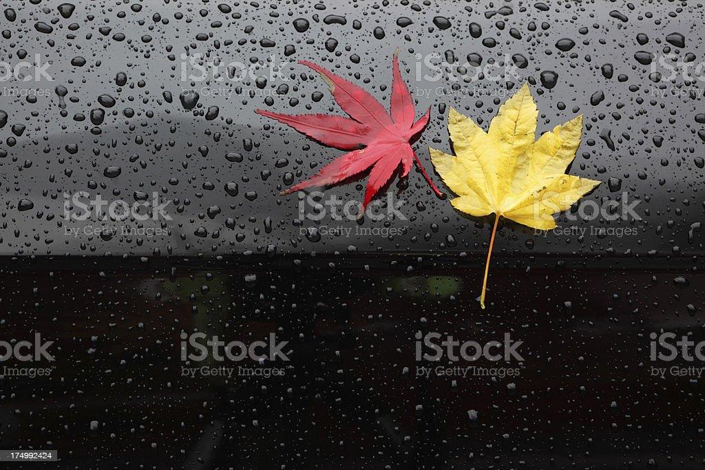 Black Paint Water Drop Autumn. royalty-free stock photo