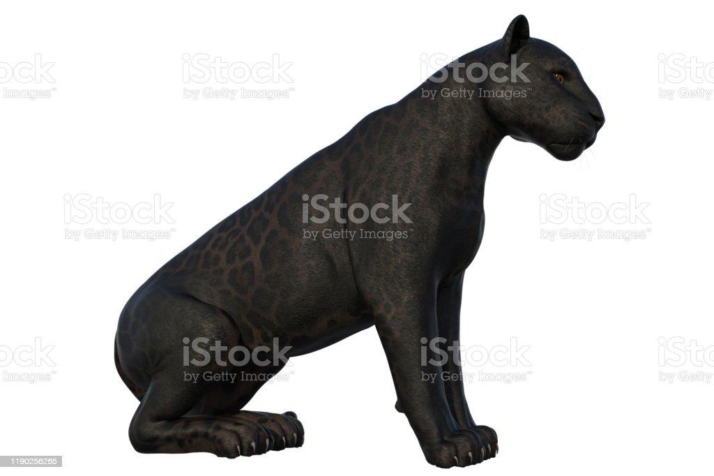 Black Panther Cat isolerad på vit, 3D Render. - Royaltyfri Aggression Bildbanksbilder