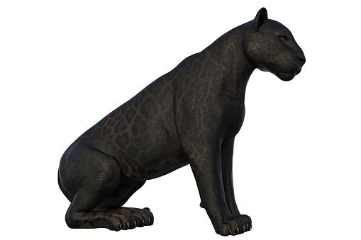 Black Panther Cat Isolerad På Vit 3d Render-foton och fler bilder på Aggression