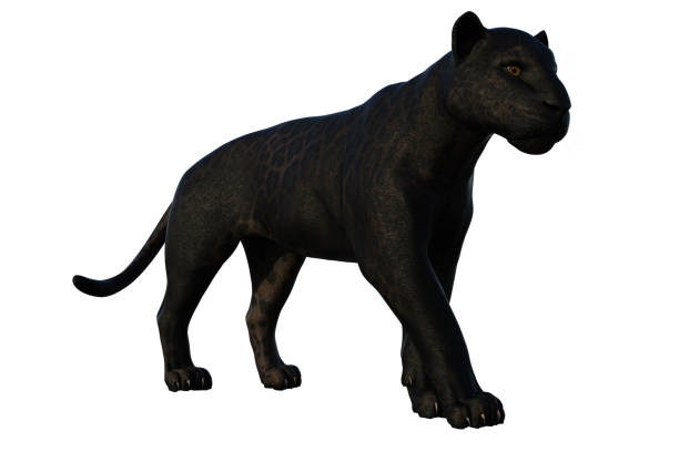 black panther cat isolerad på vit, 3d render. - black panther jungle bildbanksfoton och bilder