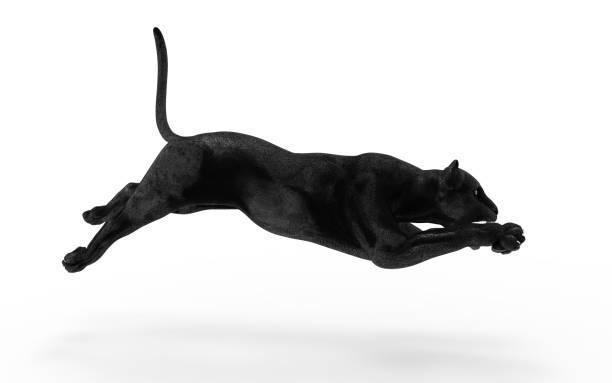 Black panther leopard Black panther isolate on white background, Black tiger, 3d Illustration, 3d render jaguar cat stock pictures, royalty-free photos & images