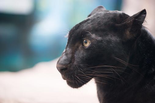Black Panther-foton och fler bilder på 2015