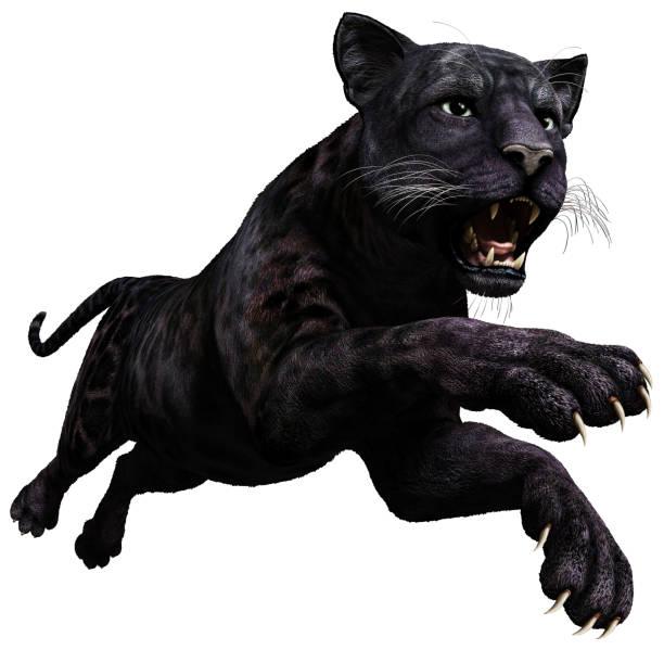 black panthère - panthere noir photos et images de collection