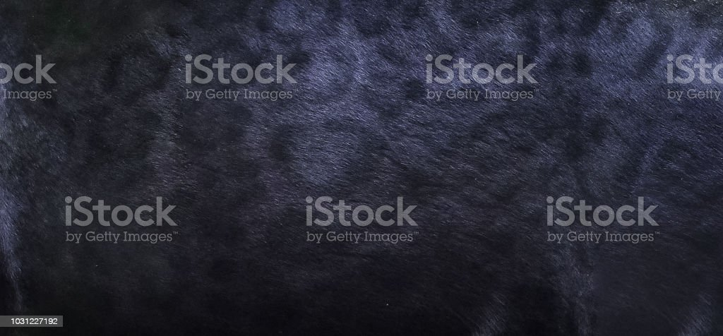 Black panther skin texture background stock photo