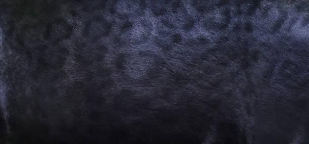 黑豹皮膚紋理背景圖像檔