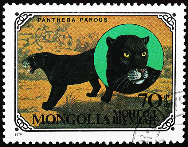 black panther stamp - black panther jungle bildbanksfoton och bilder