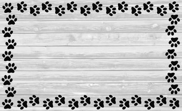 Pata negra imprime o quadro sobre fundo branco de madeira. - foto de acervo