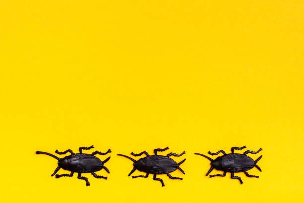Sarı karton arka plan üzerinde siyah plastik hamamböcekleri. Hazır Cadılar Bayramı illüstrasyon stok fotoğrafı
