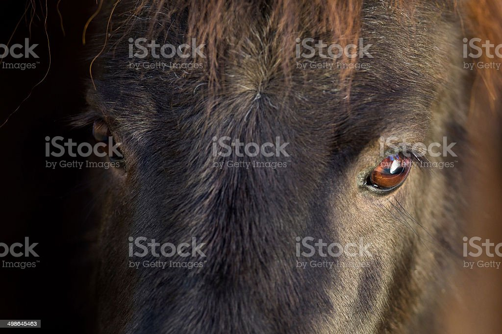 Black pony eyes stock photo