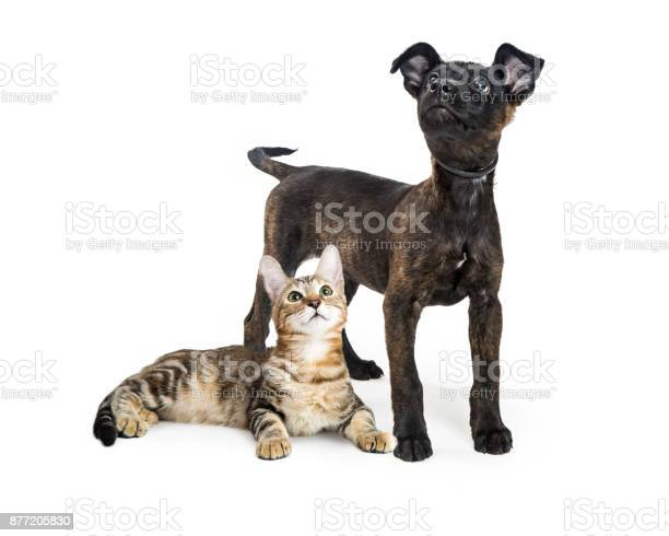 Black puppy and tabby kitten together isolated picture id877205830?b=1&k=6&m=877205830&s=612x612&h=unfzpzdhoz0ykrqkmr7lud1oxbhtog1vzpjbddyngqu=
