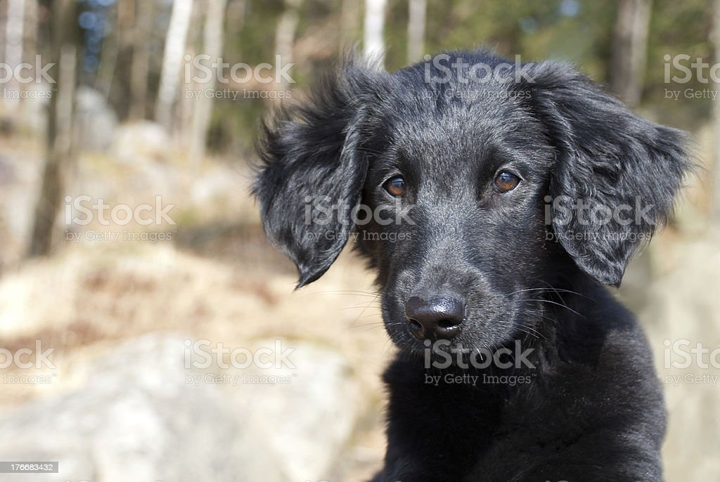 black puppy dog stock photo