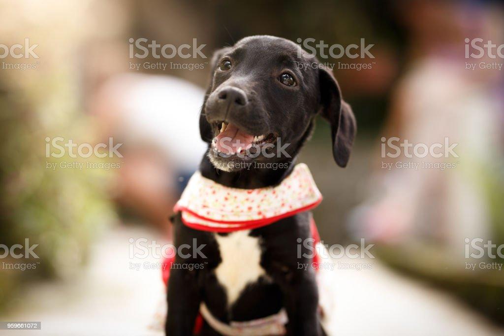 Cachorro perro negro - Foto de stock de Animal libre de derechos