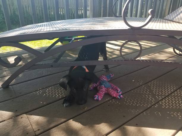 black puppy dog with dog toy underneath deck chair stock photo