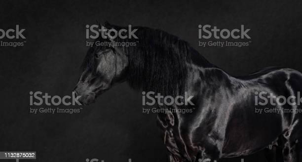 Black pura spanish stallion on dark background picture id1132875032?b=1&k=6&m=1132875032&s=612x612&h=0mzpmlkhz9skqxytyt e78c7iyufkdb9oncuvvsxpek=