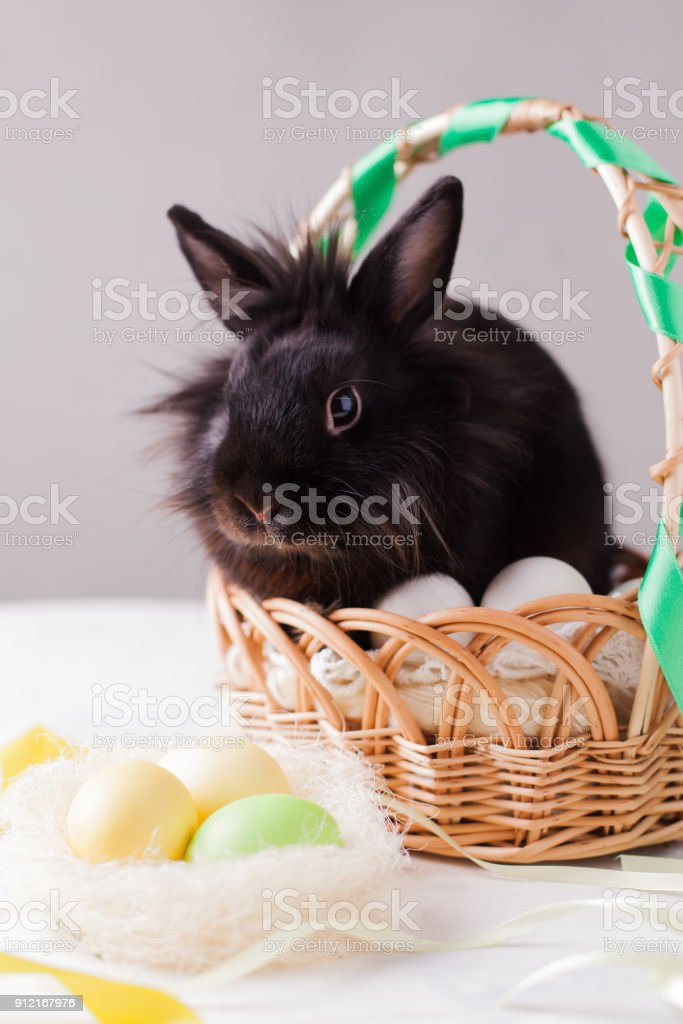 Black Rabbit In The Easter Basket With White And Colored Eggs