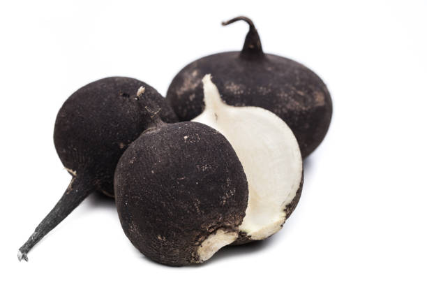 Black Rettich, isoliert auf weißem Hintergrund – Foto