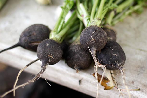 Black Radishes at the Farmer's Market stock photo