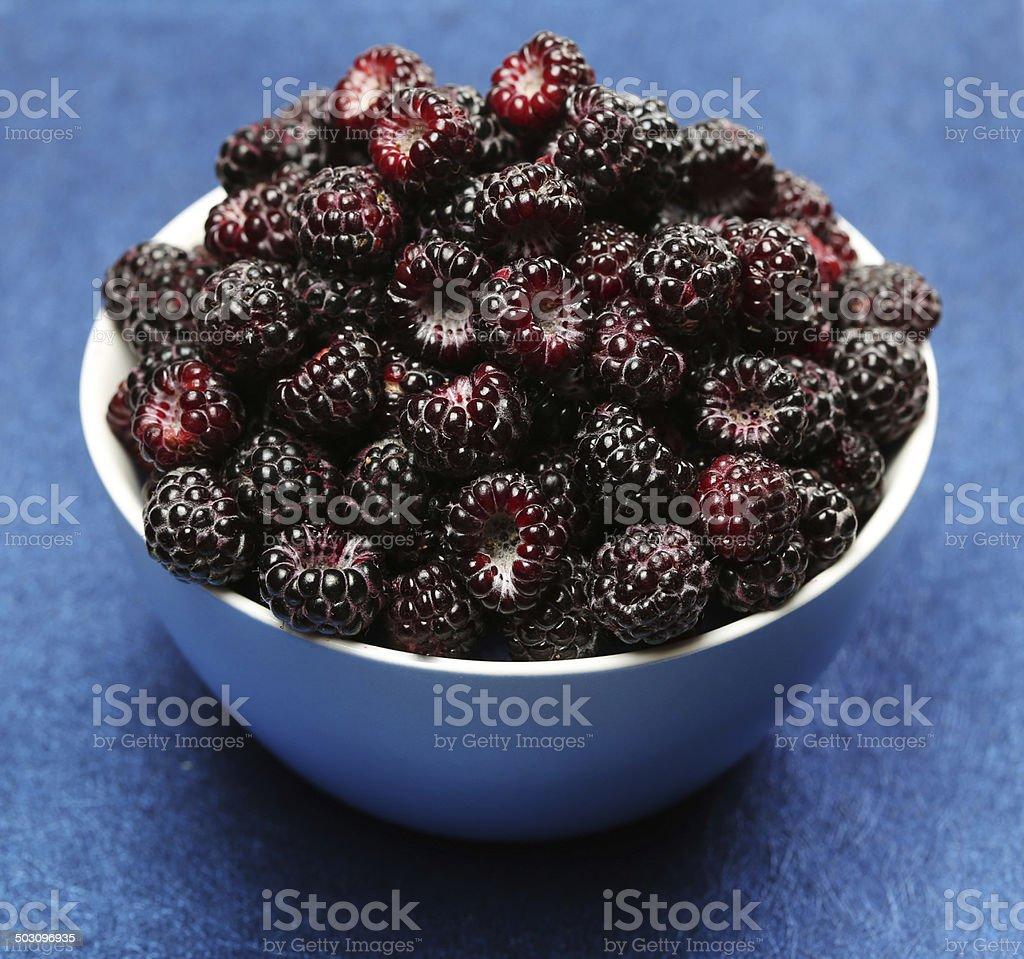 Black raspberry stock photo
