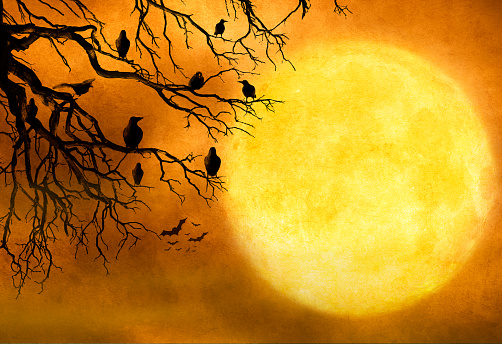 Black Ravens Sitting In Barren Tree Against Full Moon
