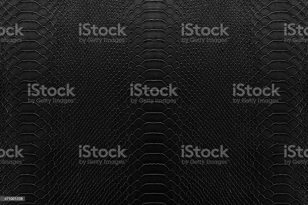 black reptile stock photo