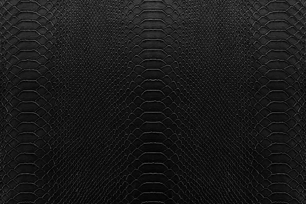 Noir reptile - Photo