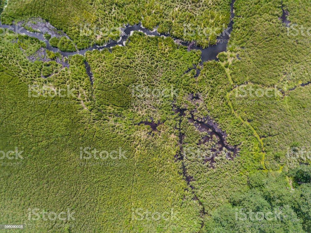 Black River Hancza in Turtul. Suwalszczyzna, Poland. royalty-free stock photo