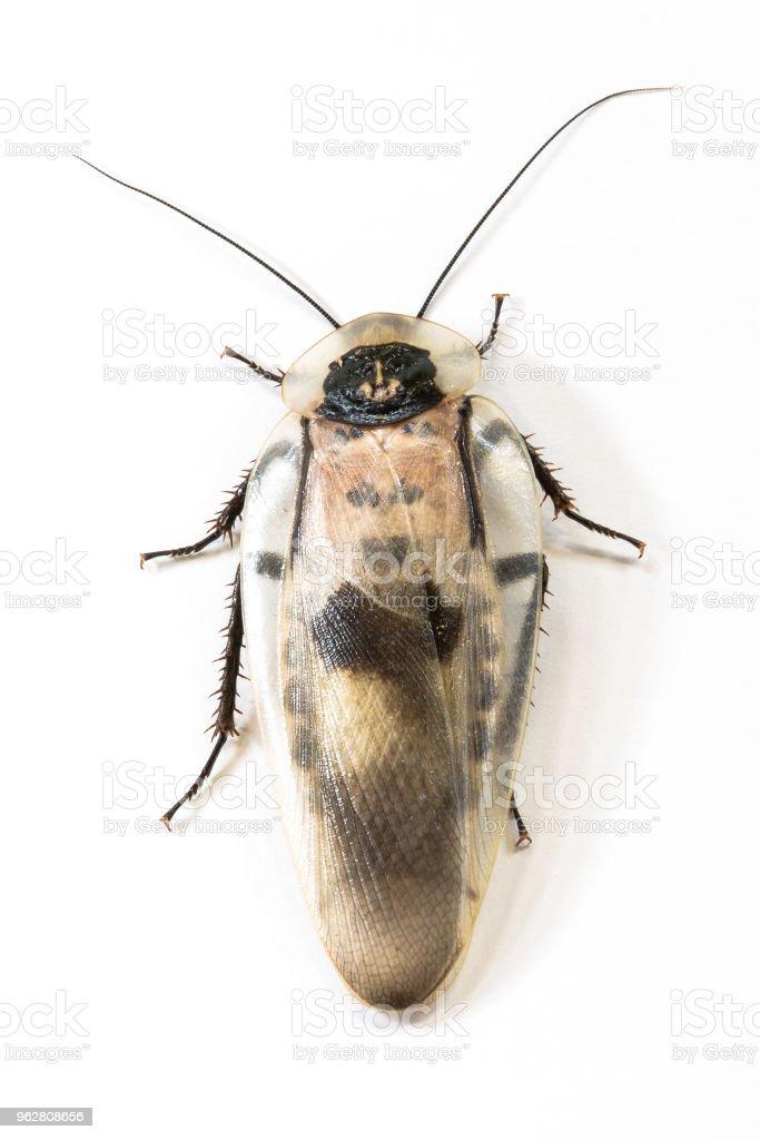 black roach cockroach - Foto stock royalty-free di Ambiente