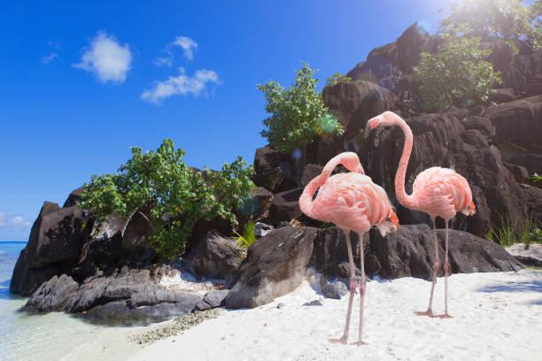 Black rocks and flamingo. Bora-Bora. Polynesia