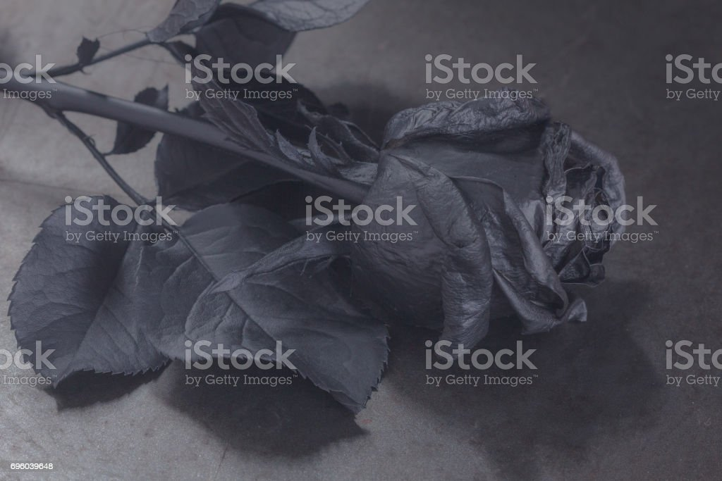 Black Rose Concept Symbol Of Sorrow Melancholy And Sad Mood Stock