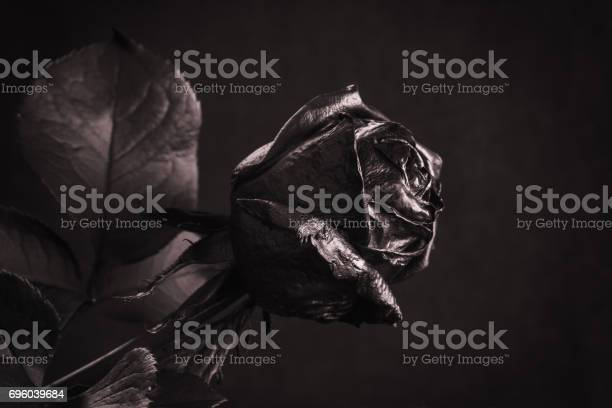 Black rose concept symbol of sorrow melancholy and sad mood picture id696039684?b=1&k=6&m=696039684&s=612x612&h=92qcgcrdwqadrjsmgh8bt2n8i 1y3z3hz1dkpxrxjee=