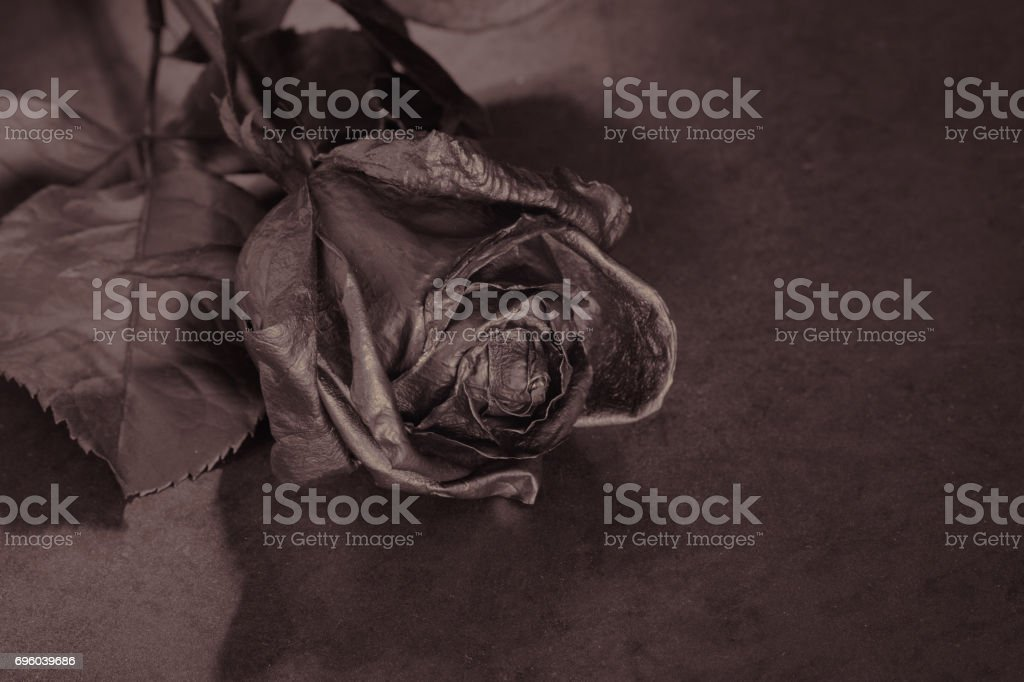 Black Rose Concept Symbol Of Sorrow Melancholy And Sad Mood Stock