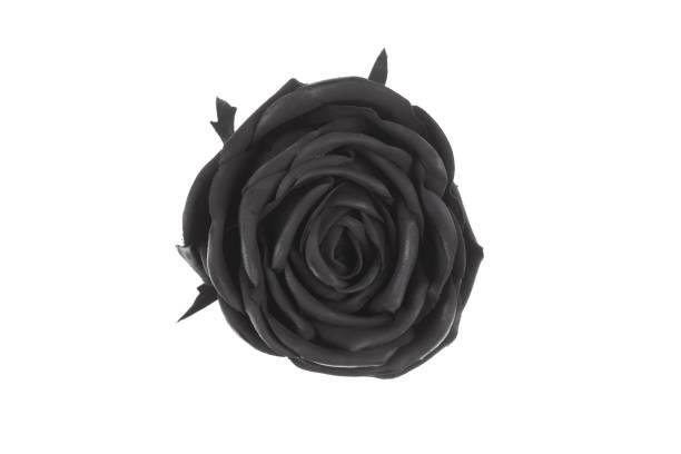 Black rose isolated on white background picture id1219928639?b=1&k=6&m=1219928639&s=612x612&w=0&h=rnljkazquw cct7oiho wywts3aqat6brvu0tinhhos=