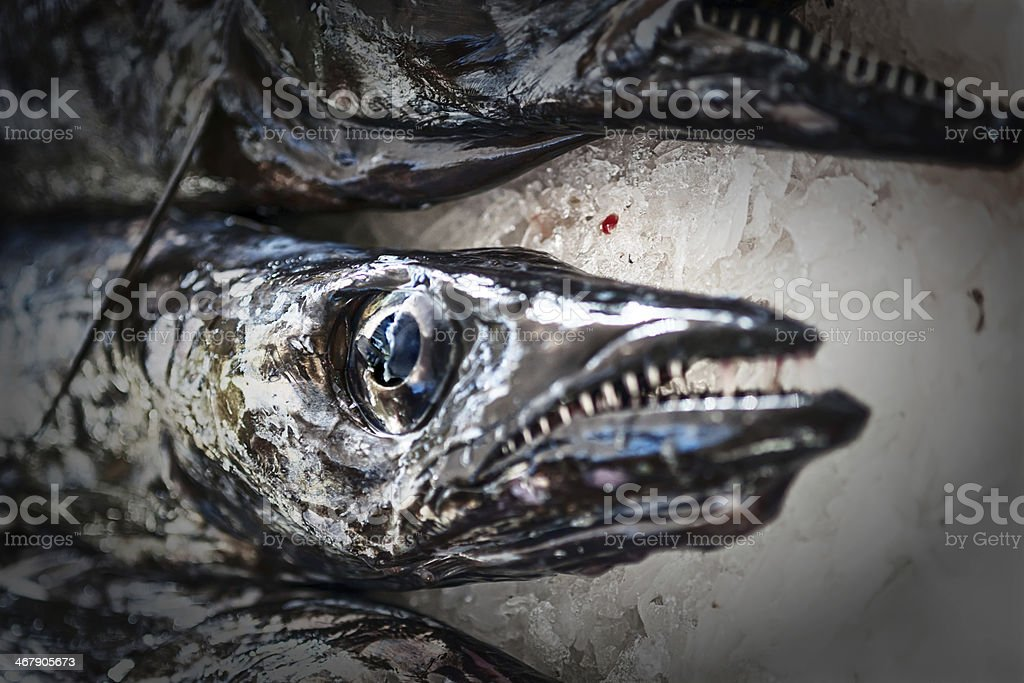 Black scabbard fish , aphanopus carbo lowe, Madeira stock photo