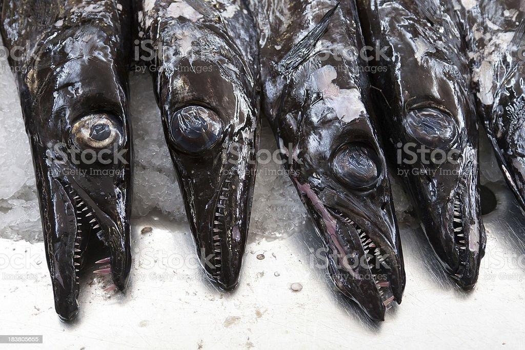 Black Scabbard fish of Madeira stock photo