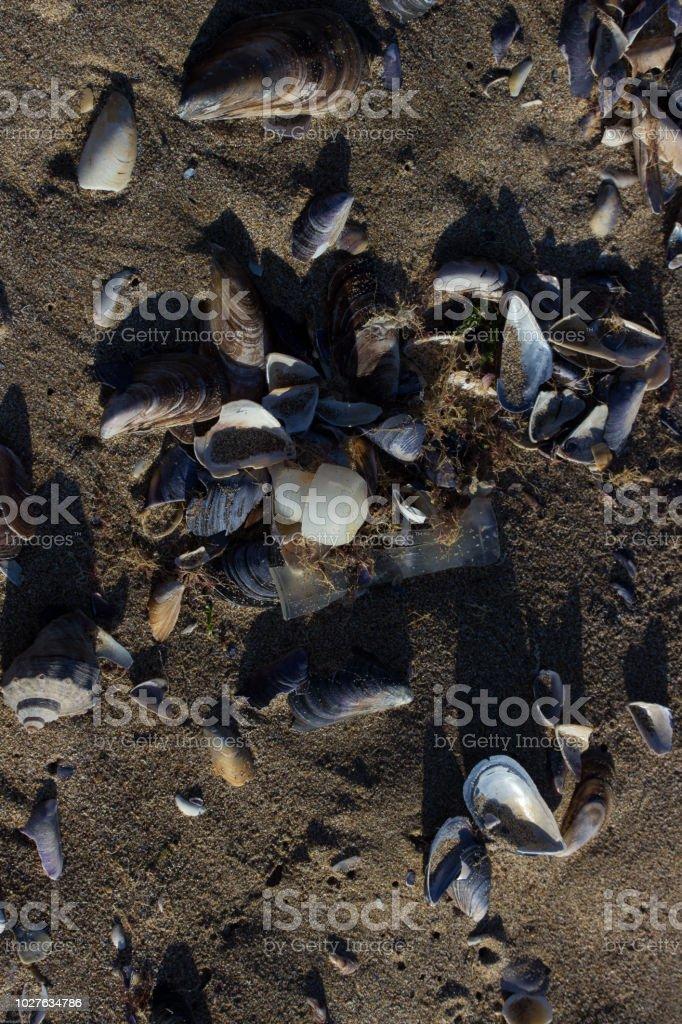 Black Sea Pollution Plastic Garbage Cast Ashore Krapets