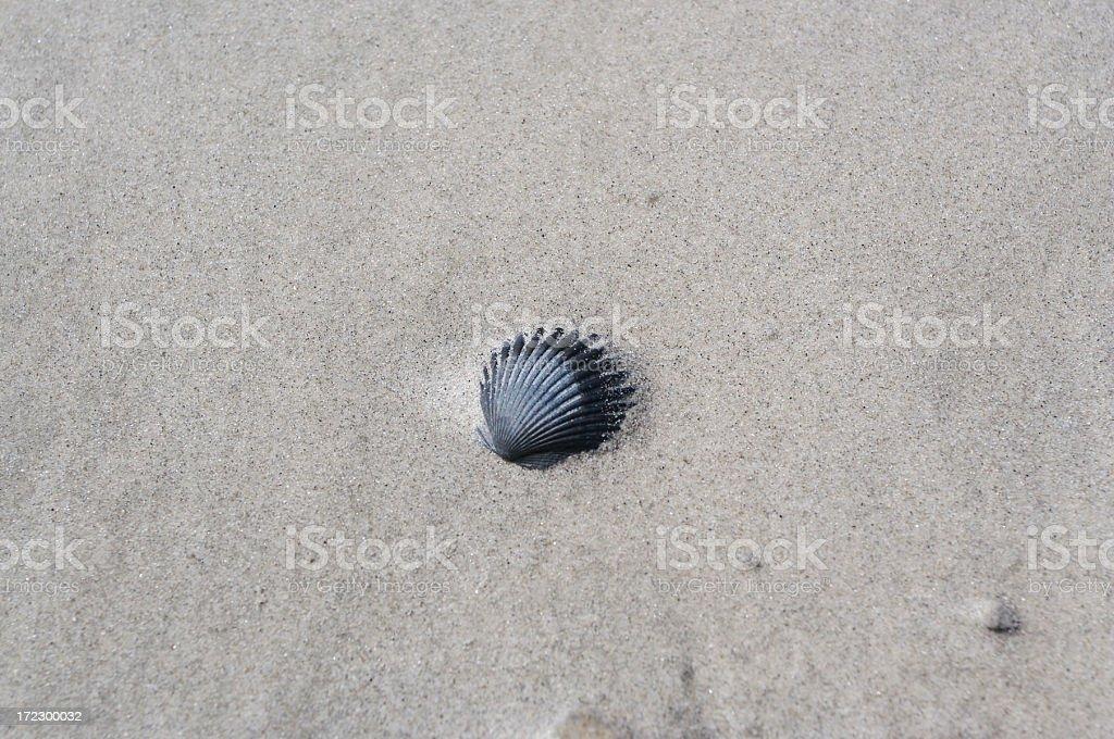 Schwarze Muschel – Foto