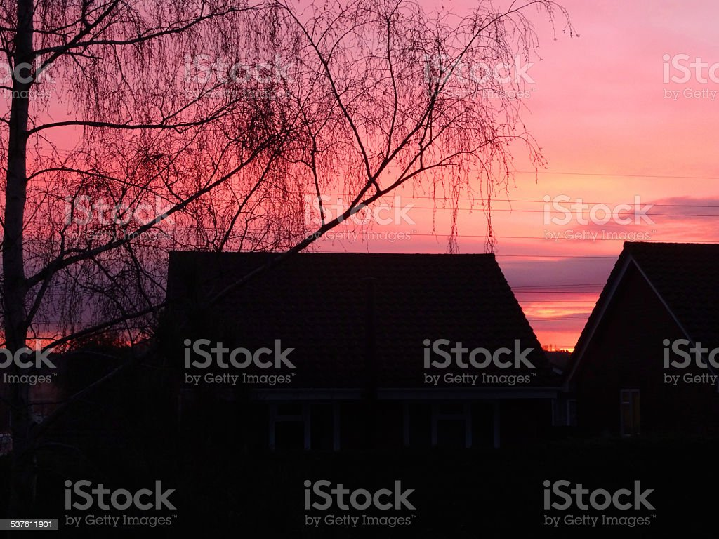 Black silver birch tree silhouette, red sunset / sunrise sky, rooftops stock photo
