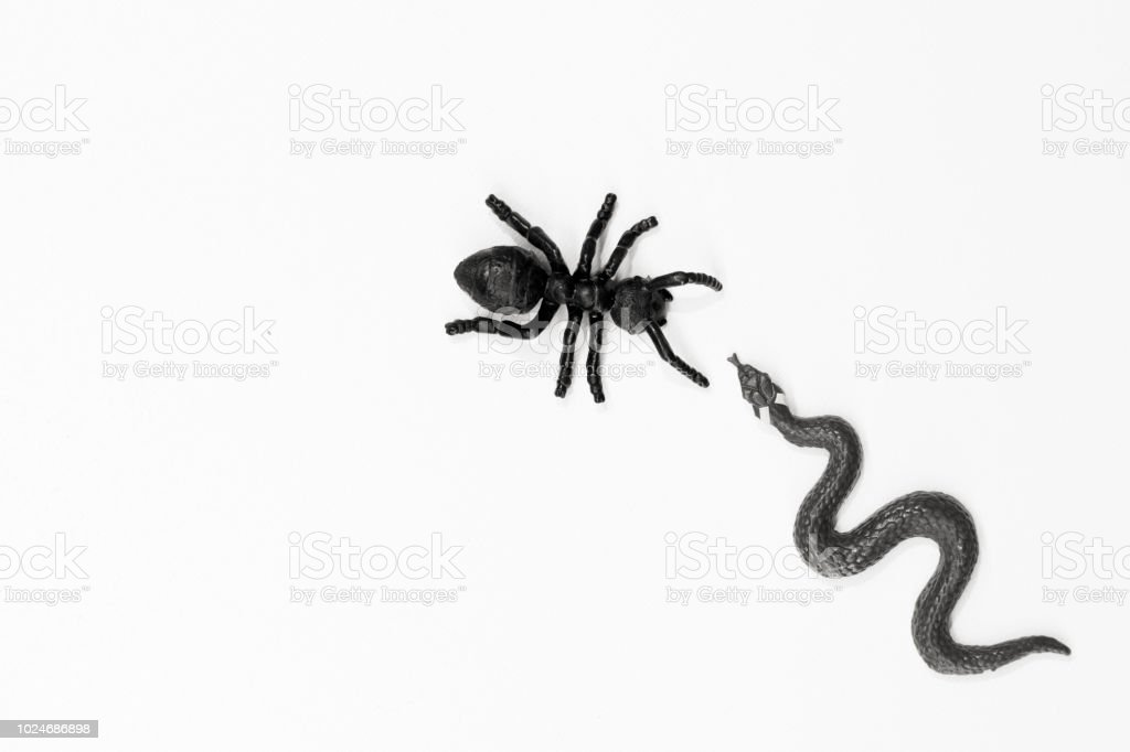 Black snake and ant meeting on white bacground stock photo